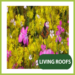 Living Green Roofs