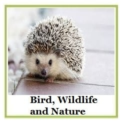 Bird, Wildlife and Nature